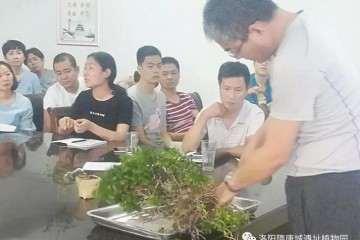 洛阳隋唐城遗址植物园举办盆景沙龙