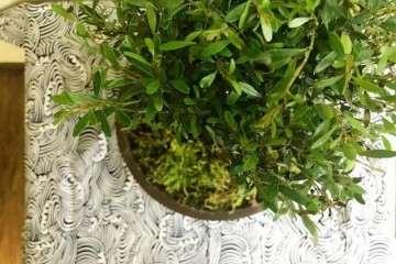 图解 赤楠盆景《树下》的制作过程