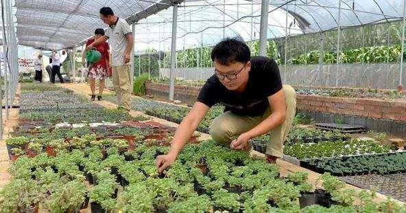 大学生返乡创业培育微盆景