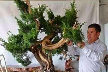 盆景嫁接怎么芽接补根的方法