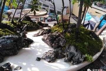 图解 黑檀水旱盆景怎么制作的方法
