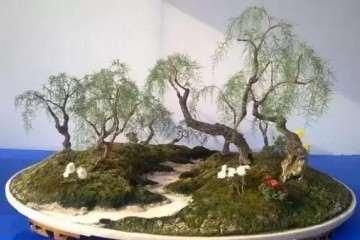 柽柳盆景怎么管理与维护的方法
