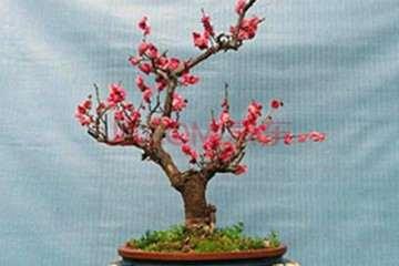 花卉盆景夏天养护和浇水的6个技巧