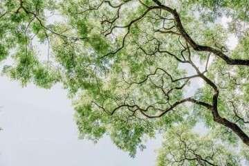 我和盆景有个约会——黄鹤小学盆景领养活动
