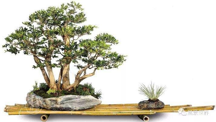 首届国际盆景协会中国会员展云南获奖作品
