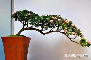盆景培养中的树冠和根系哪个更重要