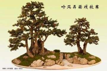 制作盆景怎么挑选树桩的方法