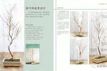 盆景图书 图解盆景鉴赏制作养护技巧