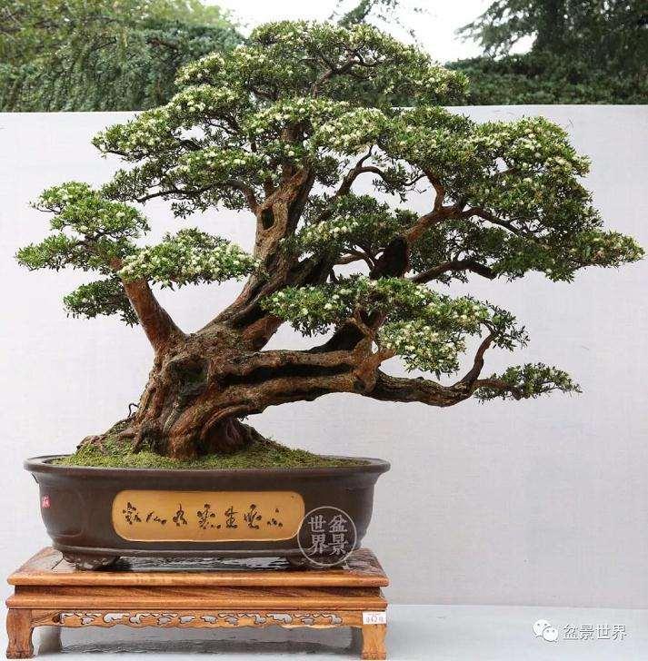 国际盆景协会中国会员展金银铜奖作品