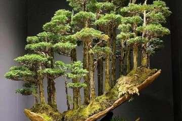 欧洲的盆景大师:格雷厄姆.波特「视频」