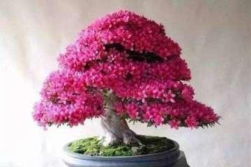不同品种花卉盆景培养土的配制方法