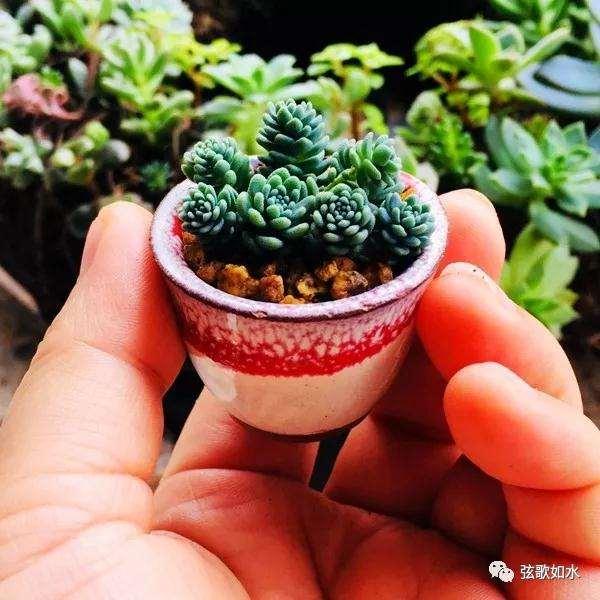 怎么制作微型多肉盆景植物