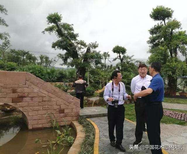 BCI国际盆景艺术大师考察云南盆景