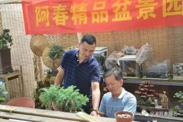 2019年 宁波盆景艺术培训班开始招生