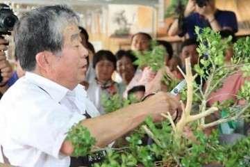 李政区长会见日本国际盆景大师小林国雄一行