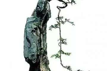 怎么用铝丝制作附石盆景的方法