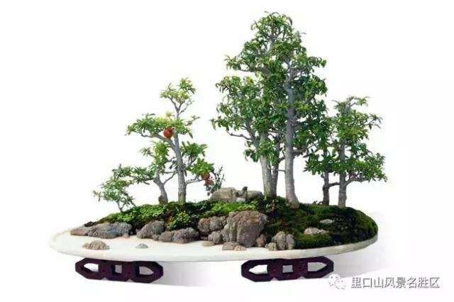 吴林海决定将盆景园建在这里
