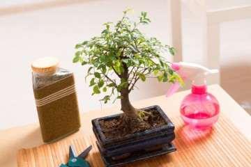 迎春花盆景怎么取材与培育措施