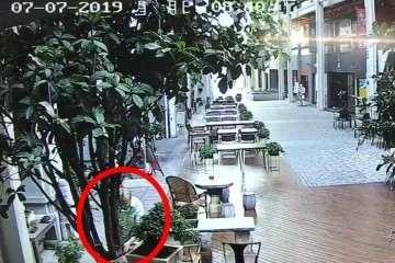 江岸分局台北街发生多起盆景被盗事件