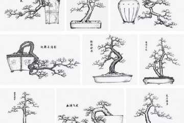刘仲明《岭南盆景百态图》手绘节选