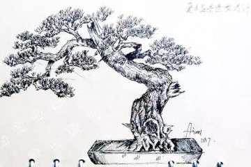 松树盆景曲干型桩材怎么造型设计