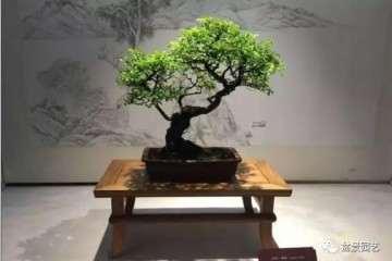扬派盆景是中国著名的汉族传统艺术之一