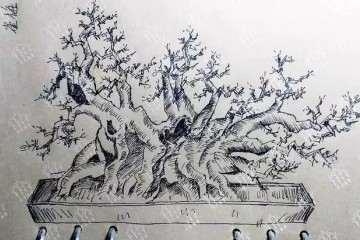 雀梅大丛林盆景怎么造型的方法 图片