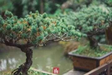 杭州超山盆景艺术博物馆