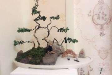 养了两年的龙鳞黄杨盆景是怎么成型的
