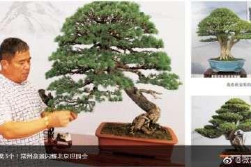 2019年 中国世界园艺博览会在北京举行