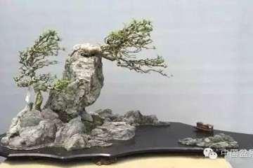 2019北京世界盆景园艺博览会