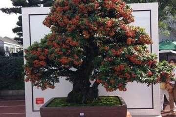 2019北京世园会盆景国际竞赛颁奖典礼