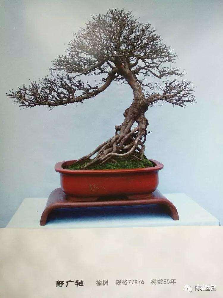 北京世界盆景博览会在沩水河畔隆重举办