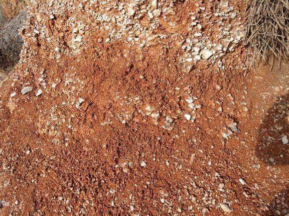 风化岩和红土种映山红下山桩合适吗