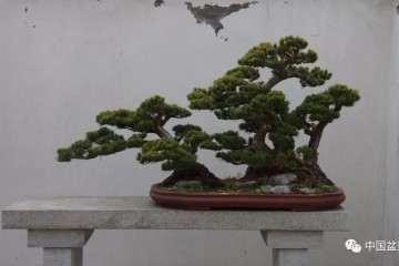 上海盆景基地欢迎来日本盆景友人参观