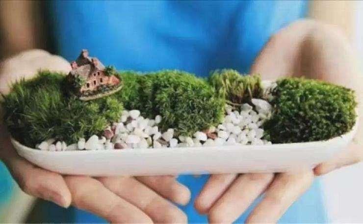 北京暑假苔藓微盆景制作活动报名