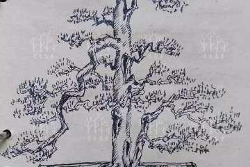 图解 罗汉松盆景的造型设计图