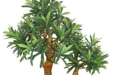 盆栽罗汉松长出新叶比较长 如何修剪