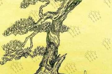 松树桩材盆景怎么逼芽缩枝的设计图