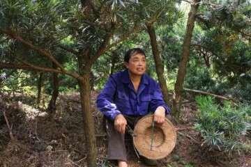 他67岁 种了16年罗汉松盆景 怎么卖掉