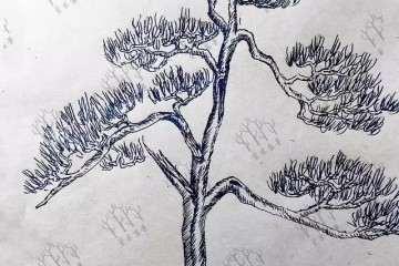 罗汉松盆景树怎么造型设计 图片