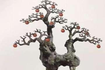 重庆金弹子盆景