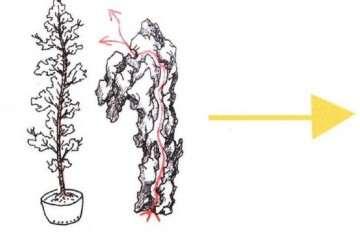 图解 嵌入式附石盆景怎么制作