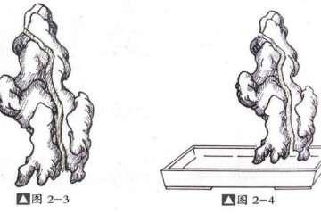 图解 切槽嵌入式附石盆景怎么制作