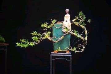 雀舌黄杨怎么用铝丝制作盆景造型 图片