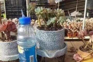 多肉植物上盆后几天浇水一次最好 图片
