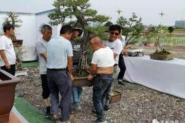 河南省首届盆景艺术大师作品展