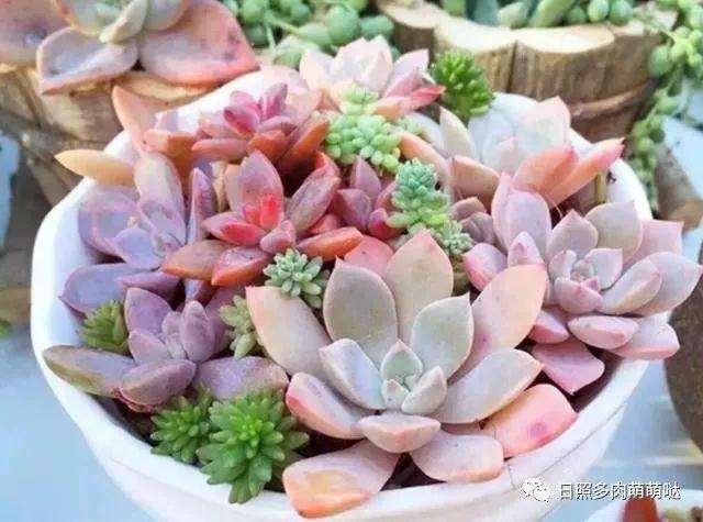 露天多肉植物如何清理灰尘 图片