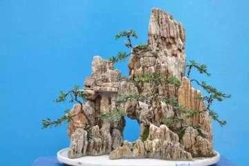 山石盆景怎么选石加工的方法