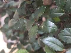 榆树下山桩叶子上好多小虫 怎么办